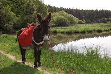 randonnée âne loire
