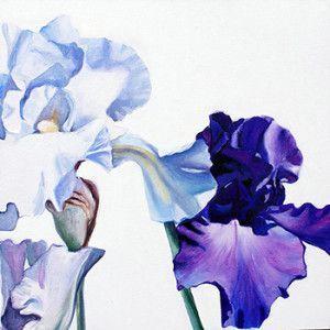 provence-iris