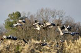 Robert-Ansel-oiseaux